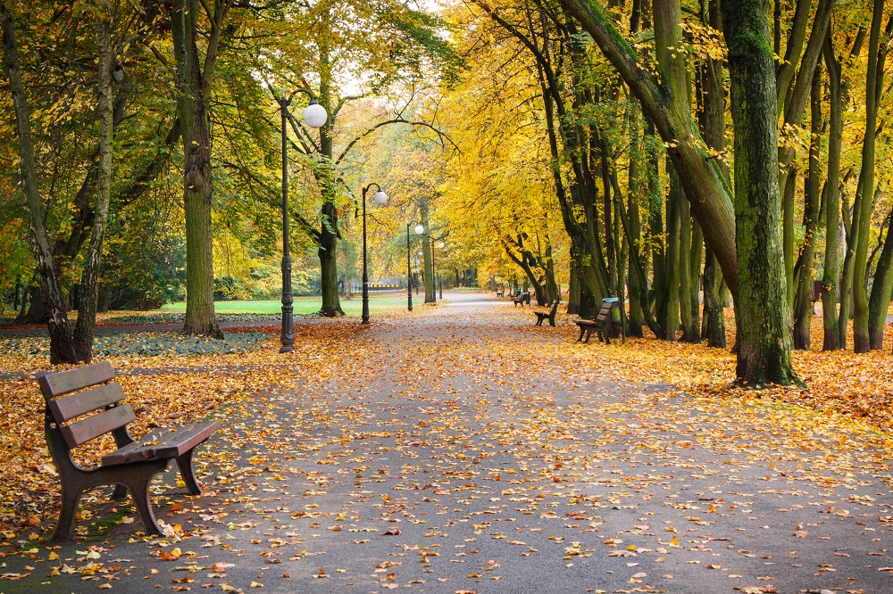 footpath-with-bench-for-relaxation-in-autumnal-PKLDYF2.jpg